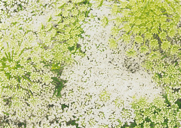 Schwarz Wei? Karo Tapete : Tapete AS Creation Floral gr?n wei? 3313-11 online kaufen
