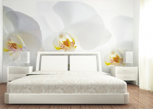fototapete tapete blume gro e orchidee wei floral foto. Black Bedroom Furniture Sets. Home Design Ideas