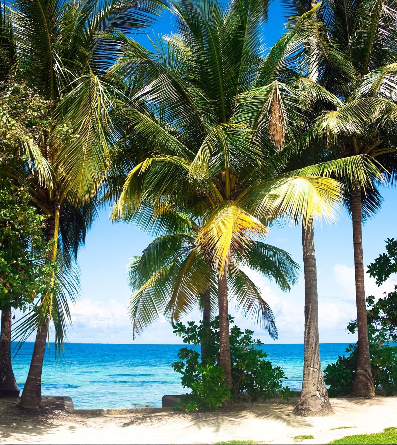 wandbild 180 x 202 cm 2 teilig kleister fototapete palmen insel strand meer. Black Bedroom Furniture Sets. Home Design Ideas